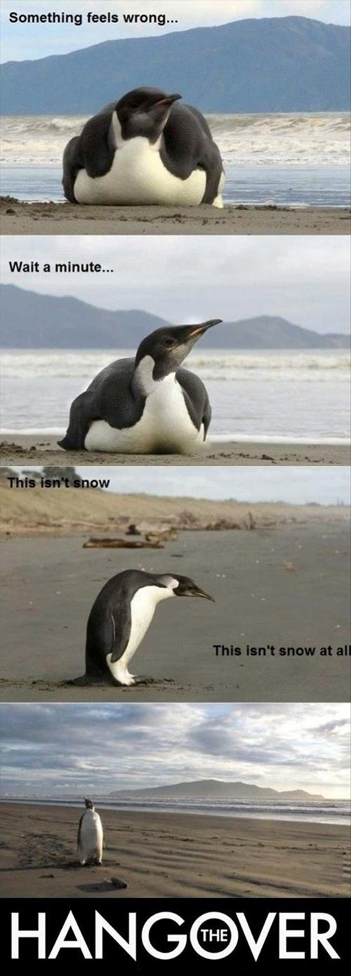beach snow movies funny penguins - 8053879296