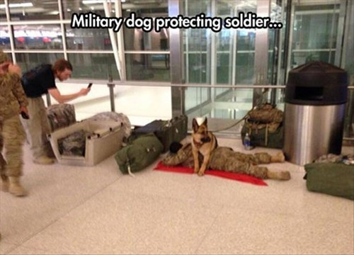dogs protection military veterans