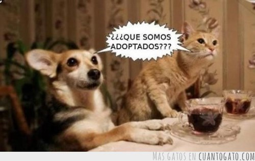 Memes animales gatos perros - 8055437568