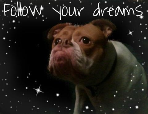 dogs inspirational funny - 8055688960