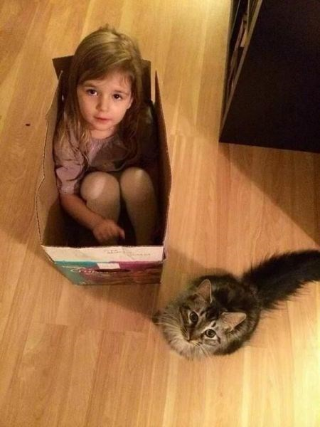 kids,box,parenting,Cats