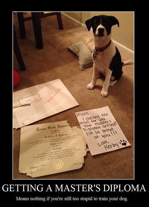 homework dogs diploma funny animals - 8055762432