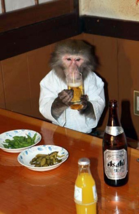 beer monkey funny pubs animals
