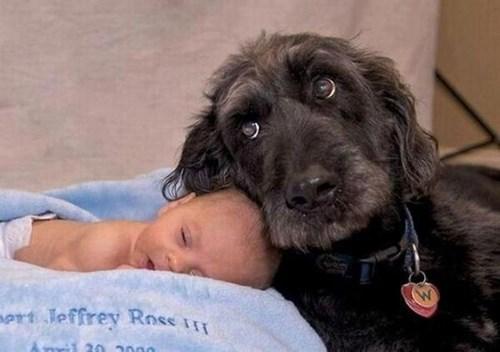 Babies dogs cute love - 8056033024