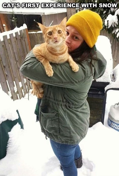 snow,cold,winter,Cats