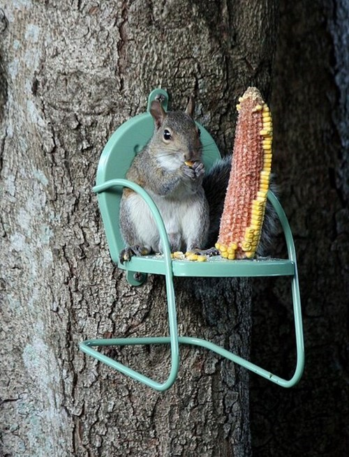 corn,squirrel,noms