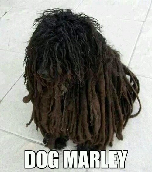 bob marley dogs dreds funny - 8056162304
