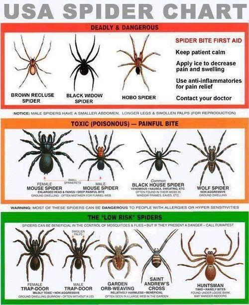 spiders science creepy funny - 8056200448