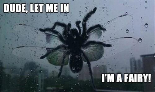 crazy scary bugs weird - 8056203776