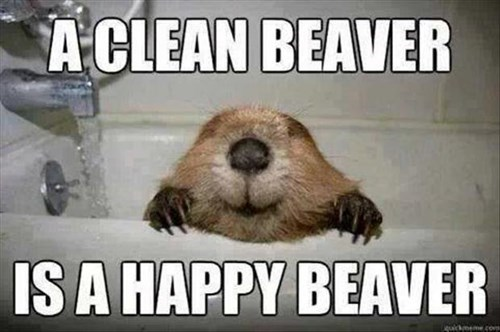 beavers baths cute happy - 8056206592