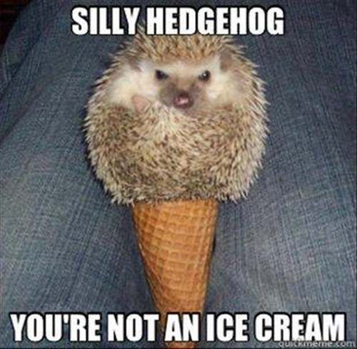 cute ice cream hedgehog funny - 8056212480