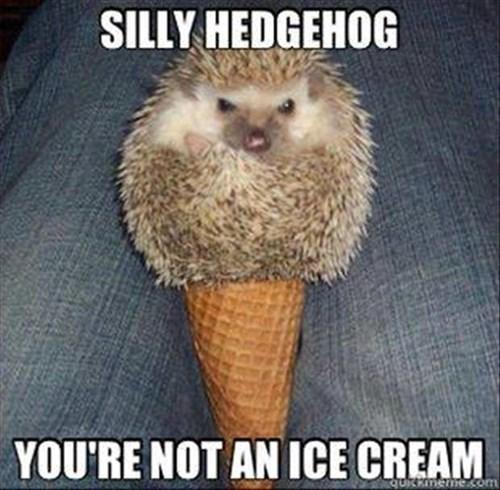 cute ice cream hedgehog funny - 8056212480