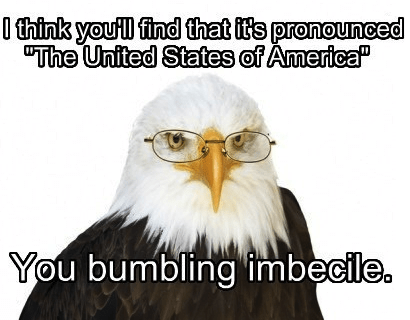 eagles,murica,smart eagle