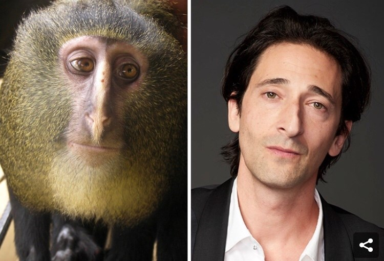 celebrity animal doppelgangers