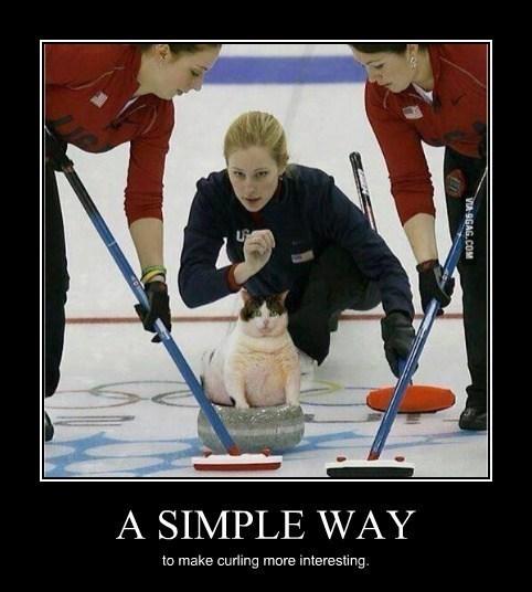 Sochi 2014 curling Cats funny olympics - 8057968128