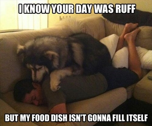 dogs tired bothering noms funny - 8058081024
