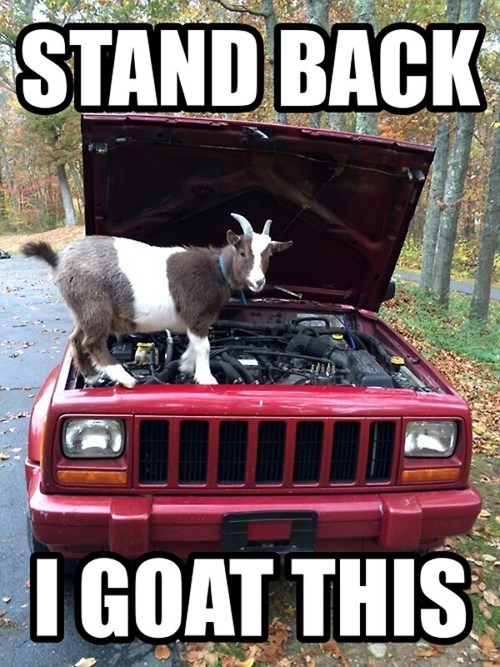 goats puns cars mechanic funny - 8058081792