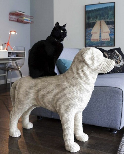 dogs scratching post Cats funny