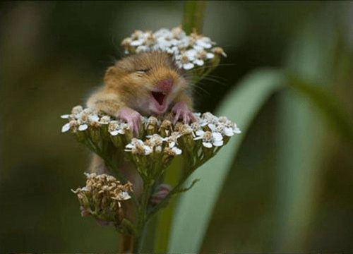 cute hamsters flowers squee - 8058106880