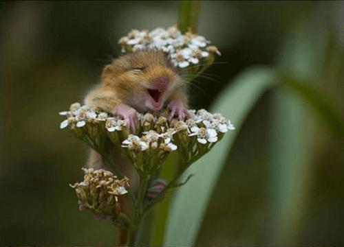 cute hamsters flowers squee - 8058106880