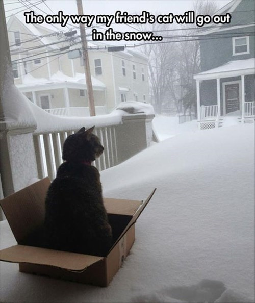 snow cold if i fits i sits Cats funny - 8058232320