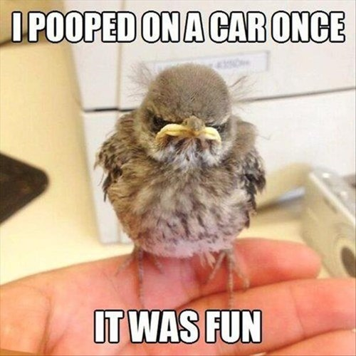 poop birds grumpy funny - 8058242048