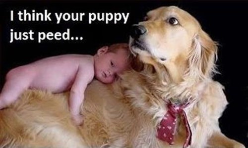 Babies dogs pee cute funny - 8058249728