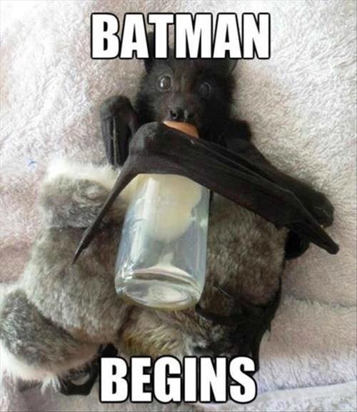 Babies,bats,batman,funny