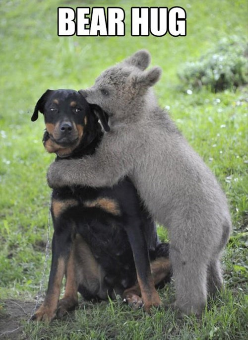 dogs bears cute hugs