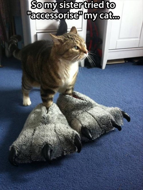 feet slippers Cats funny - 8058287104