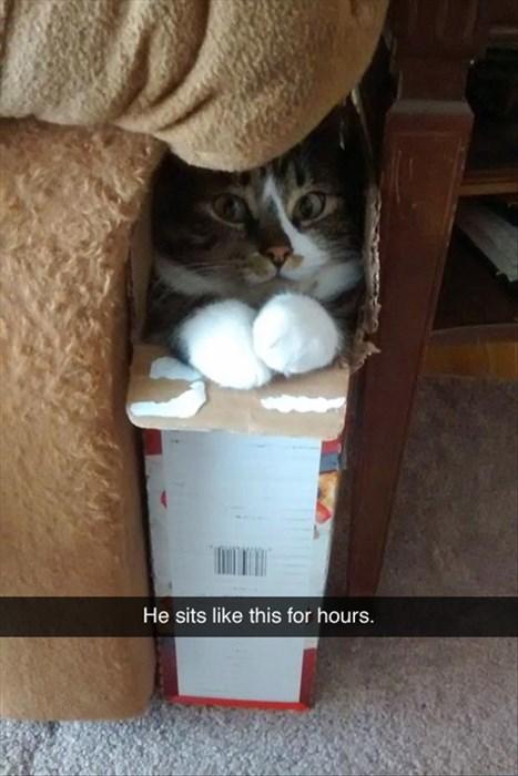 boxes cute if i fits i sits Cats - 8058347776