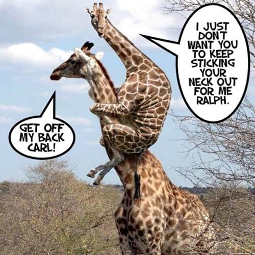 puns funny giraffes - 8058416896