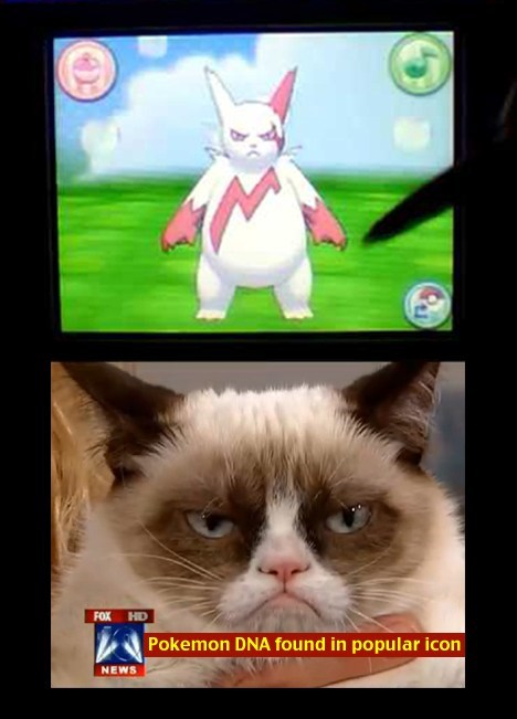 Grumpy Cat,zangoose