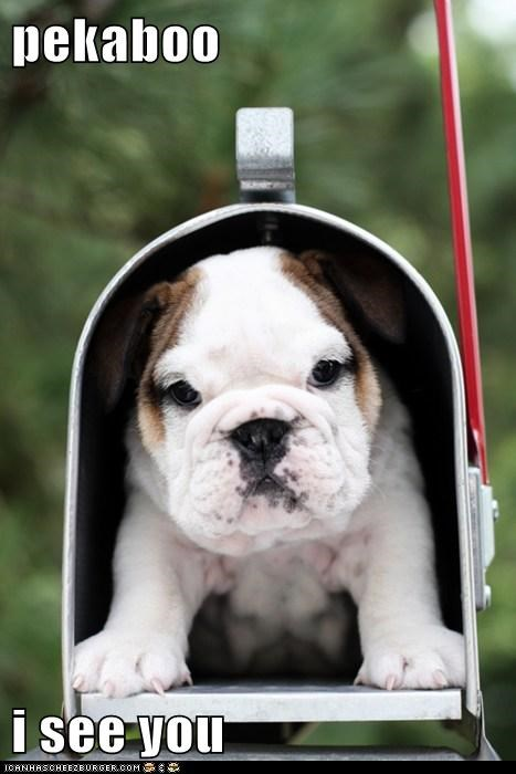cute delivery puppies mail squee