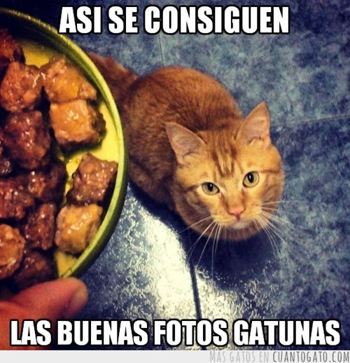 gatos animales fotos - 8059902976