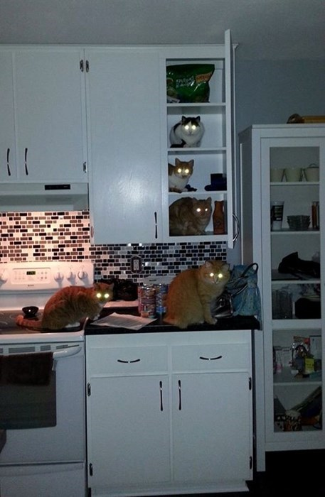 radioactive tuna eyes kitchen Cats funny - 8060609280