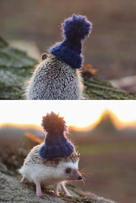 cold,cute,hedgehog,winter,hat