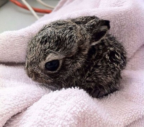 bunnies Babies cute furball - 8060611840