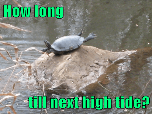 turtles tide trapped funny - 8060712448