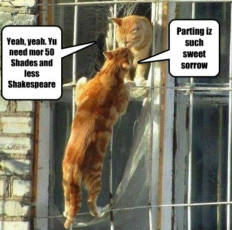 romance shakespeare cute Cats poetry - 8060979968