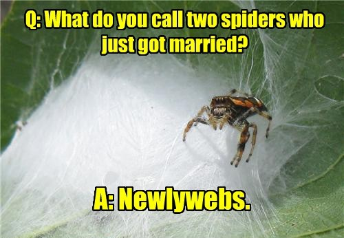 spiders,web,jokes,puns,funny