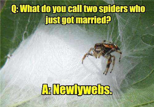 spiders web jokes puns funny - 8061114880