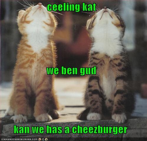 Cheezburger Image 806180096