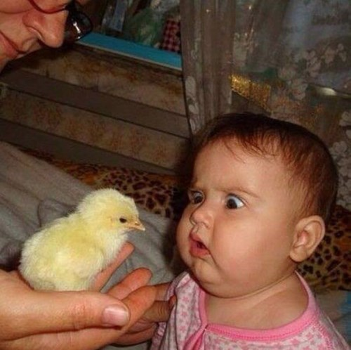 baby chick parenting g rated