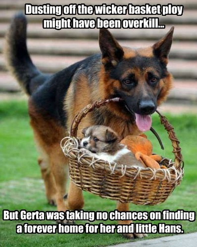 Dusting off the wicker basket ploy might have been overkill... But Gerta was taking no chances on finding a forever home for her and little Hans.