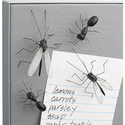 insects bugs pushpins cb2 - 8062603776