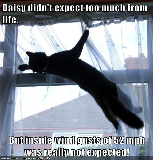 Daisy didn't expect too much from life. But inside wind gusts of 52 mph was really not expected!