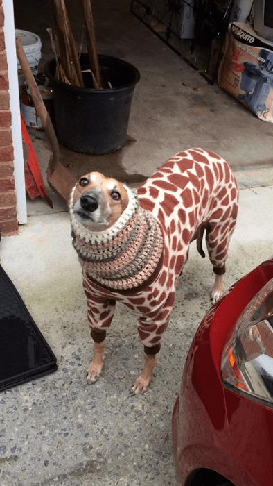 dogs poorly dressed giraffes g rated - 8062646272