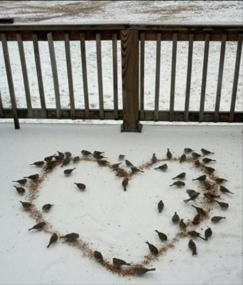 heart birds cute love winter - 8063085056