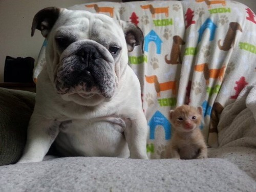dogs,kitten,photo op,cute